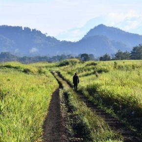The Butterfly Effect: Reportage from PNG for Griffith Review 'Writing TheCountry'