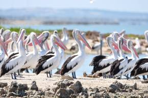 Dry At The Mouth: Witnessing the ecological collapse of The Coorong